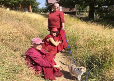 Nuns walk cats.