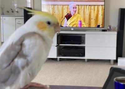 Bird watches Dharma talk.