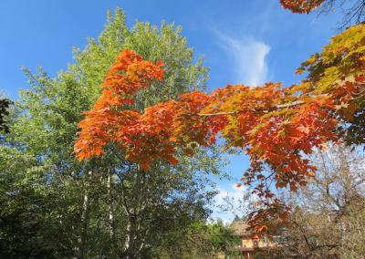 Beautiful display of a variety of colors in tree.