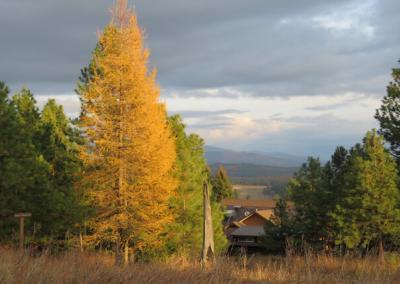 Trees, valley, meditation hall.