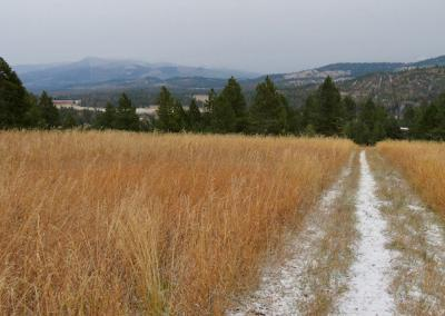 A view from the meadow after a light snow fall.
