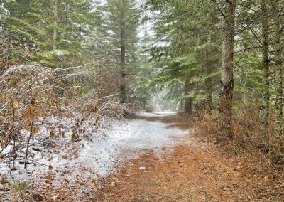 Path through forest.