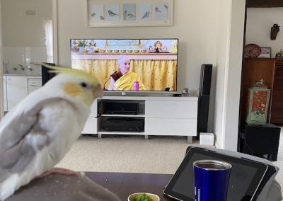 Bird watches TV.