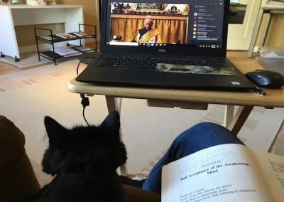 Cat watches Dharma teaching.