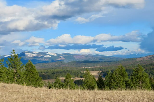 View of mountains from meadow.