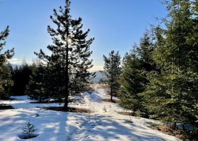 Snowy path through trees