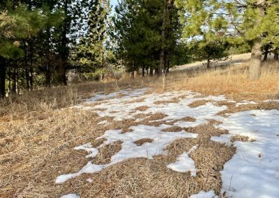 Patches of snow on grass in forest