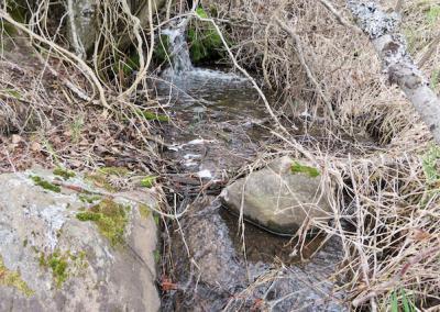 Stream flows.