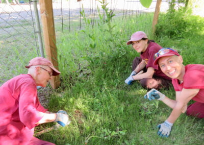 Nuns and guest pull weeds.