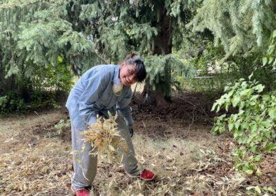 Woman rakes leaves.