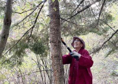 Nun trims tree