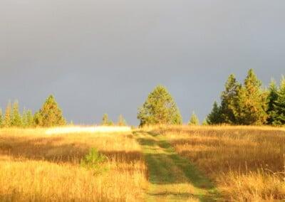 Path through golden field