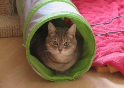 Cat in tunnel.