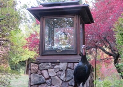Buddha house in garden with turkey in front